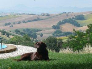 Met dank aan PtL voor de foto van Lucca Toni