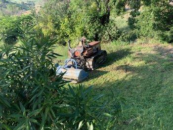 De olijfboomgaard is weer gemaaid