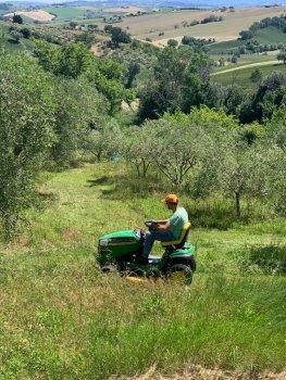 De olijfgaard is weer begaanbaar